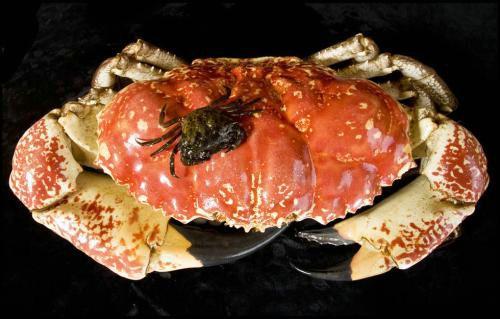 关于六条腿的帝王蟹,都了解多少