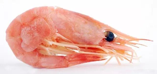 北极甜虾--北极极寒之地的精灵