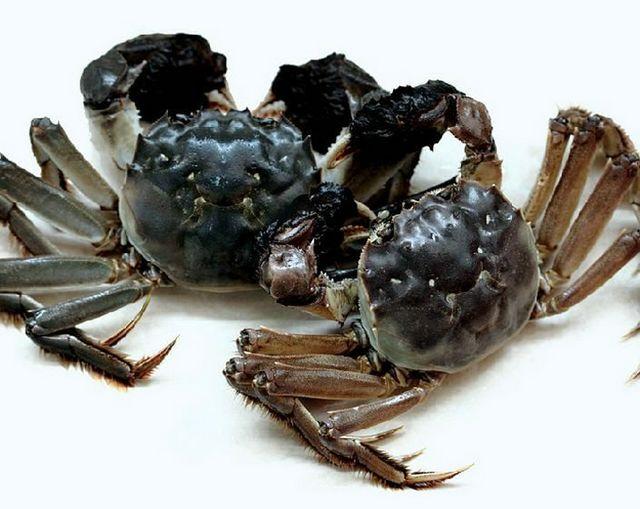 大闸蟹为什么叫大闸蟹,大闸蟹名字的由来