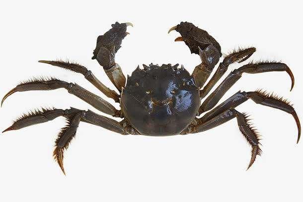 大闸蟹是公蟹好吃还是母蟹更好吃?