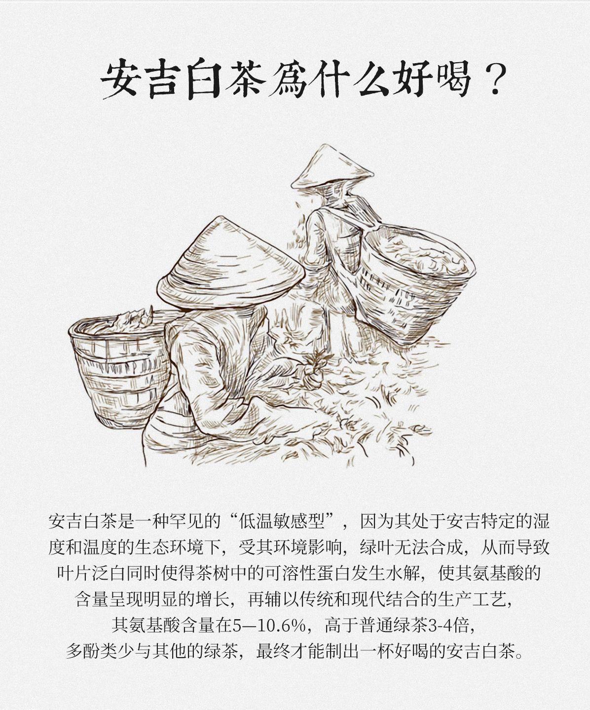 4-13-官网白茶详情_03.jpg
