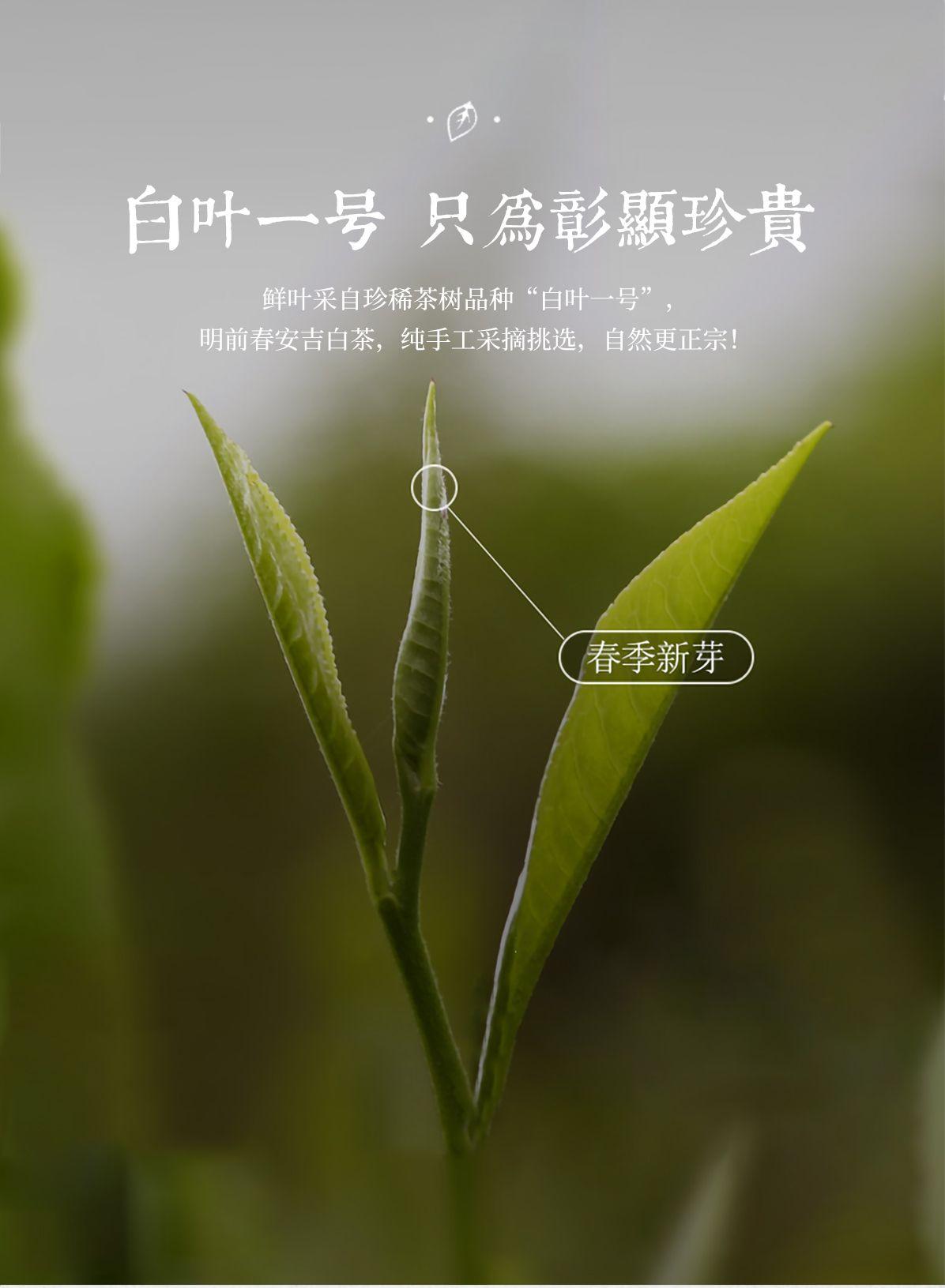 4-13-官网白茶详情_05.jpg
