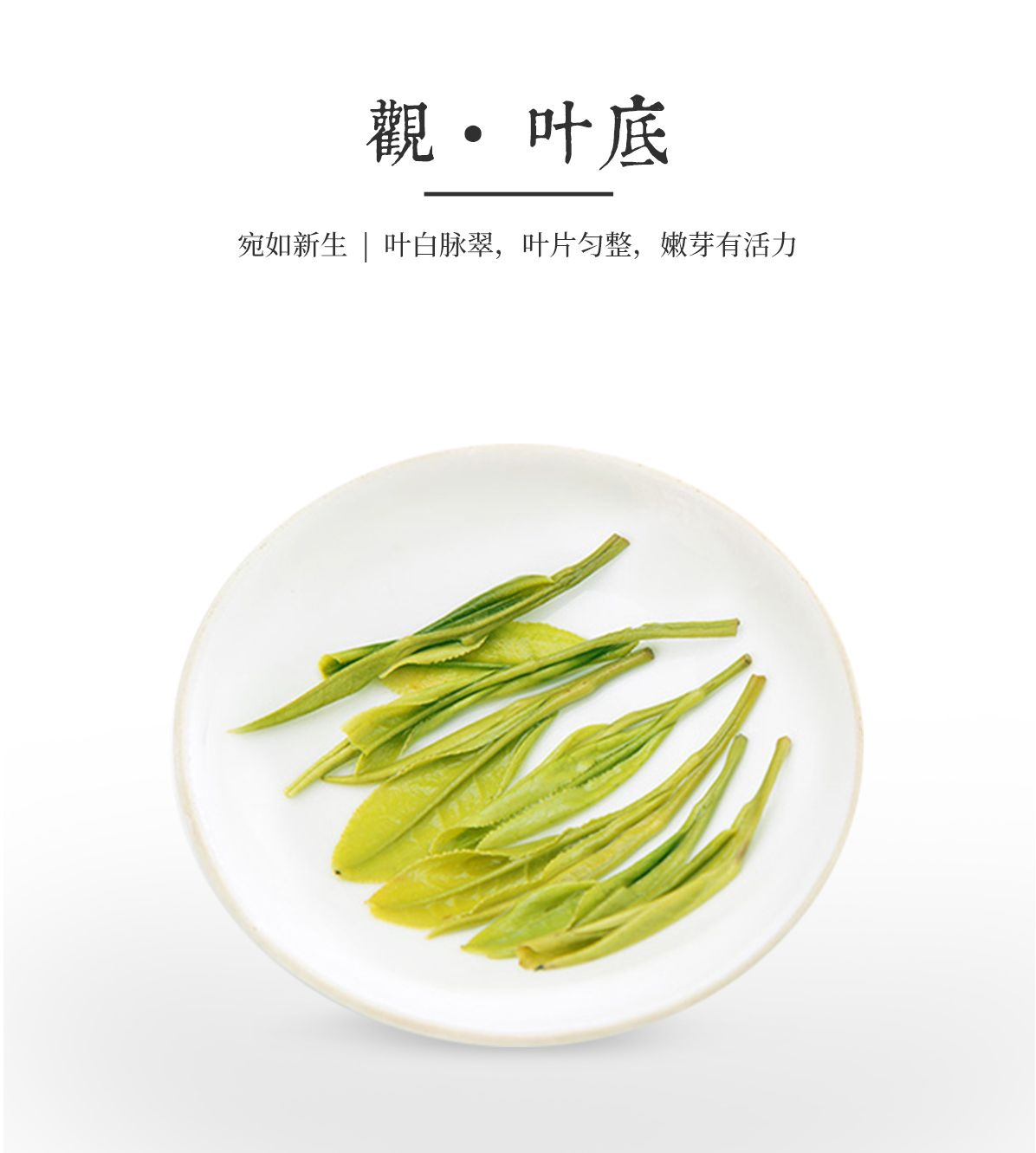 4-13-官网白茶详情_09.jpg
